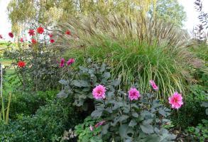 Portfolio clare challis garden design for Low maintenance planting schemes